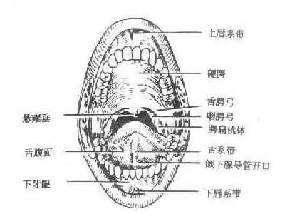 口腔颌面部外伤